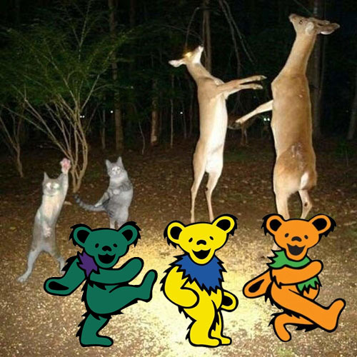 wildlifeDance